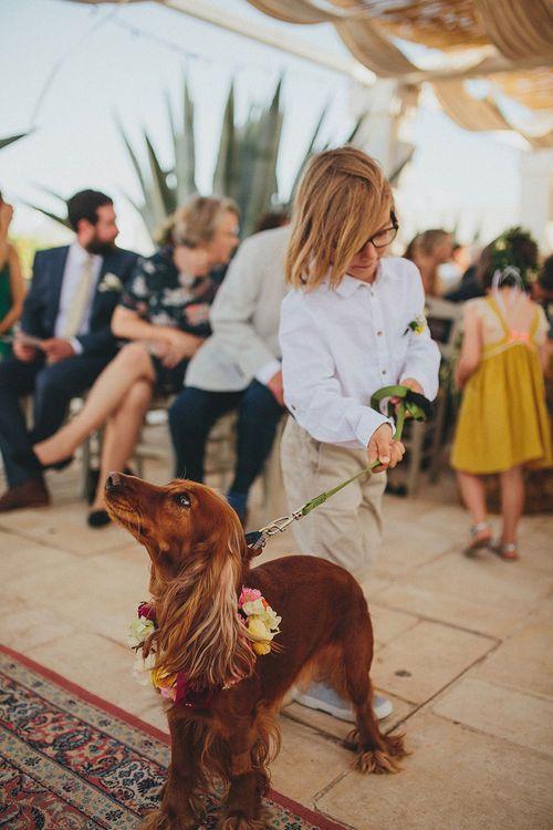 Outdoor Wedding Ceremony | Page Boy & Pup | Brightly Coloured Destination Wedding at Masseria Potenti Wedding Venue, Puglia, South Italy | Petar Jurica Photography | Marco Odorino Film