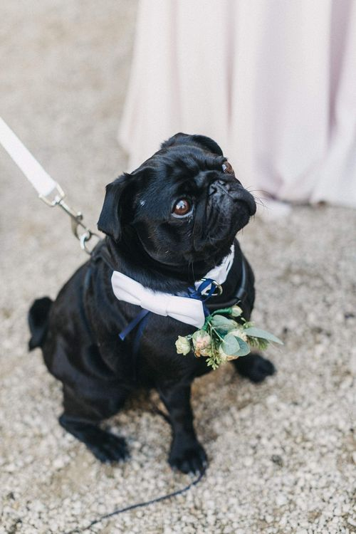 Paul the Pug | Stunning Syon Park Wedding with Quill Stationery Suite | Nancy Ebert Photography