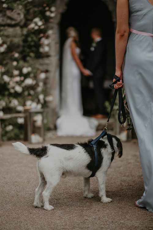 Pets at wedding with beloved dog Archie