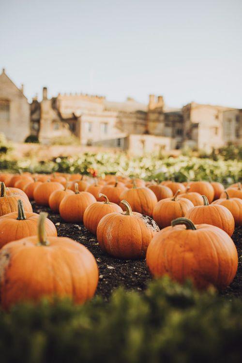 Pumpkins at Forde Abbey wedding