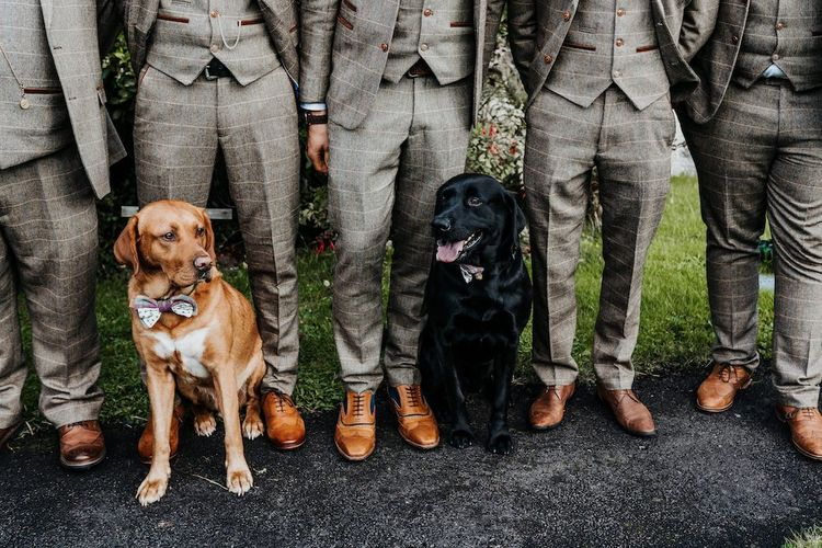 Pet dog standing with the groomsmen in check suits