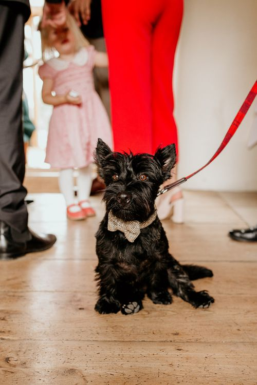 Pet dog at September wedding