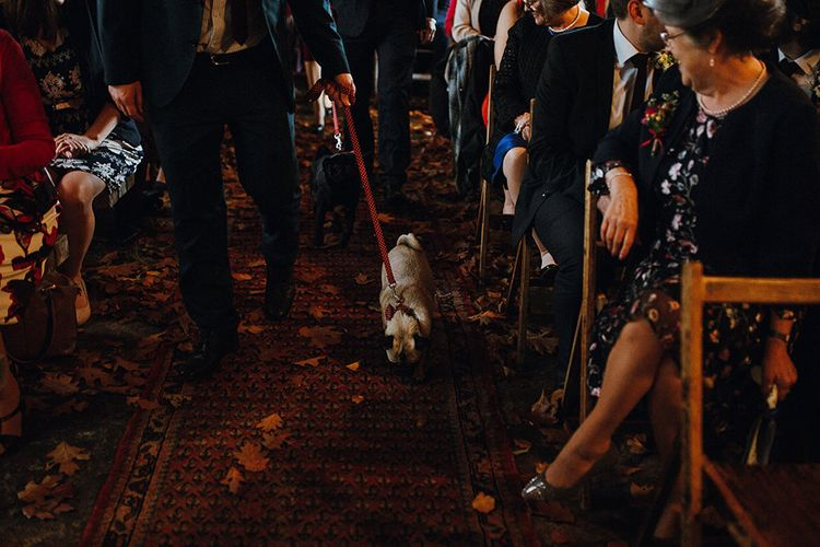 Pugs Walking Down Aisle | Persian Rugs and Autumn Leaves Lining Aisle | Rustic Wooden Chairs | Mariachi Band and Persian Rug Aisle for Autumn Wedding | Leah Lombardi Weddings