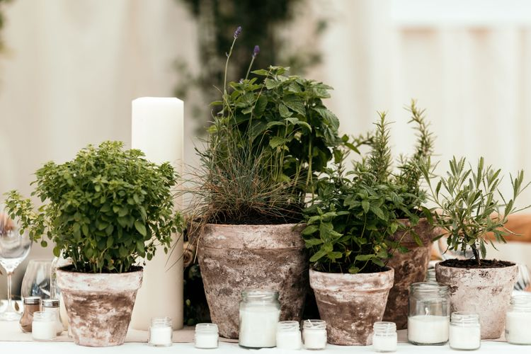 Potted Herb Centrepieces. Marquee in Jersey. Foliage Installations. Stationery by Quints of Jersey. Bride Wears Enzoani. Photography by Max Burnett