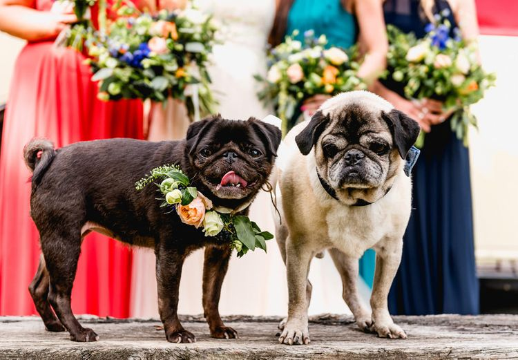 Pug Pets with Flower Collar | Vintage Fairground at Blists Hill Victorian Town Museum in Ironbridge | Lisa Carpenter Photographer