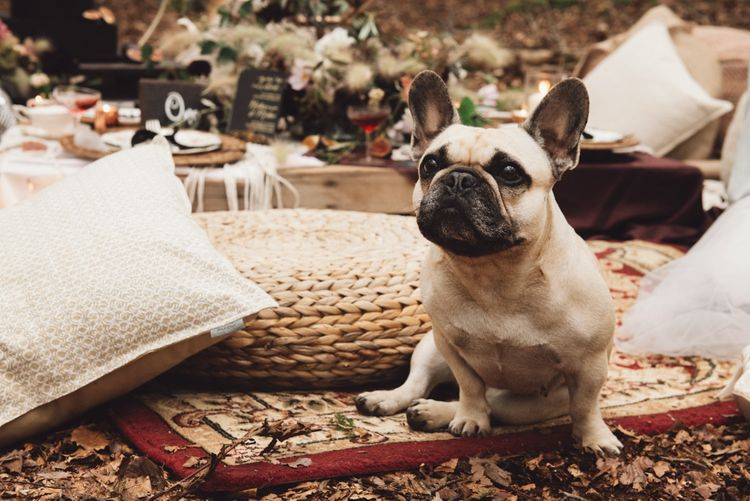 Pet Pug at Wedding Woodland Wedding Ceremony