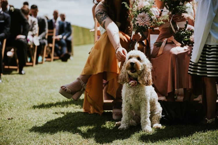 Pet dog at wedding