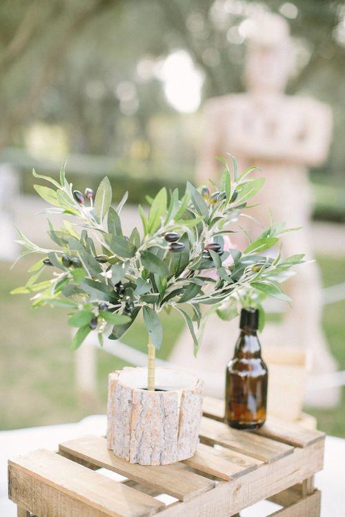 Miniature Olive Tree Wedding Decor